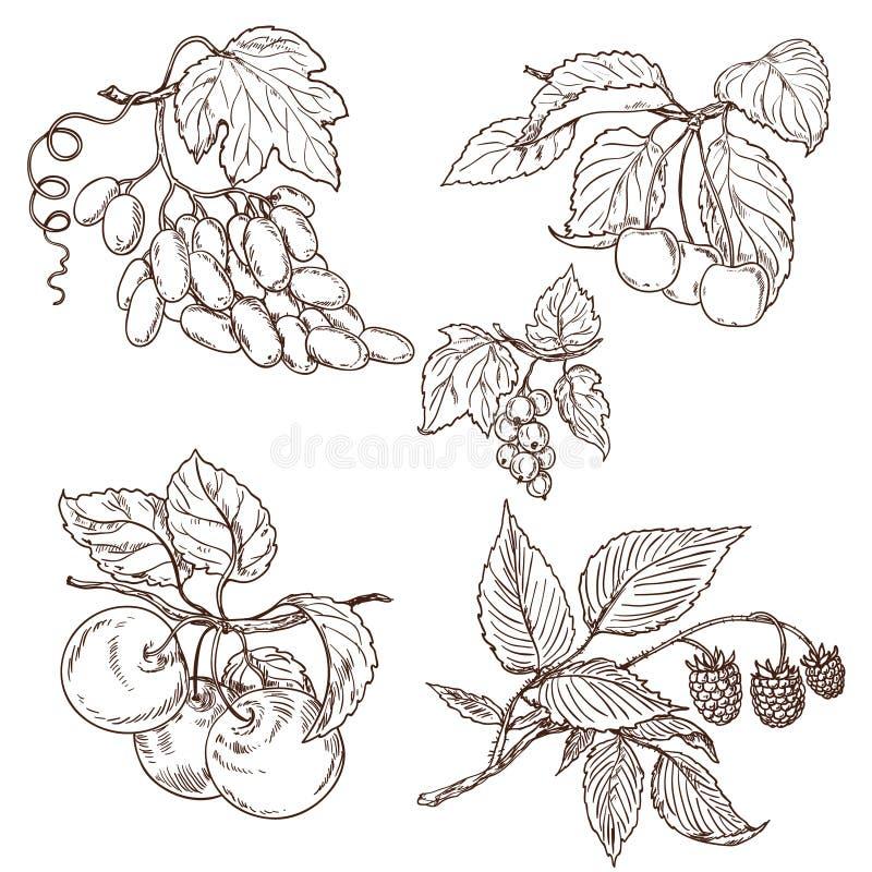 Fruktuppsättningen skissar vektor illustrationer