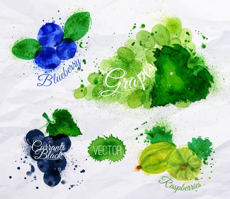 Fruktvattenfärgblåbäret, druvor, vinbär svärtar vektor illustrationer