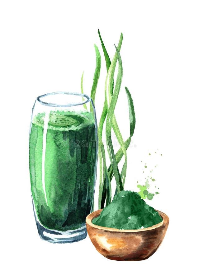 Frullato organico verde con le alghe di spirulina con polvere Illustrazione disegnata a mano dell'acquerello, isolata su fondo bi illustrazione di stock