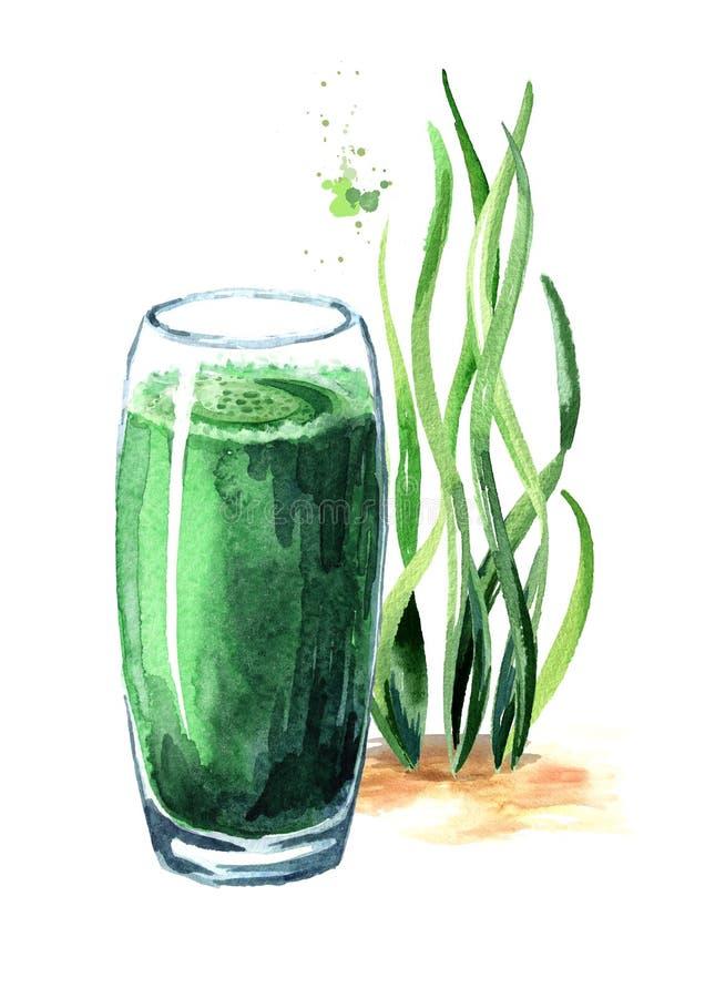 Frullato verde con l'alga di spirulina Illustrazione disegnata a mano dell'acquerello, isolata su fondo bianco illustrazione vettoriale