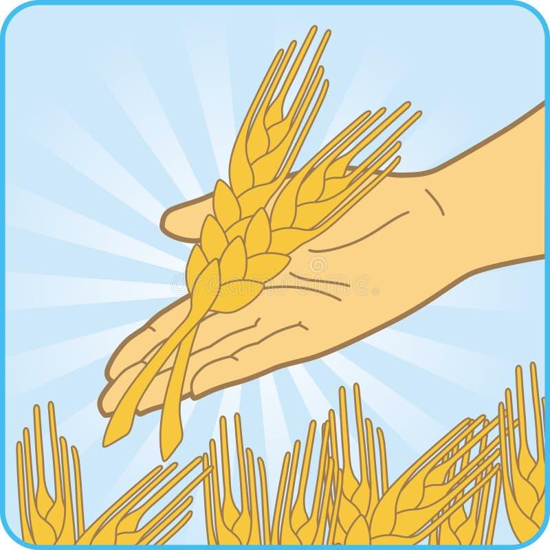 Frumento dell'oro illustrazione vettoriale