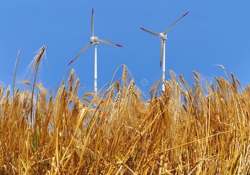 Frumento dorato con la turbina di vento fotografia stock