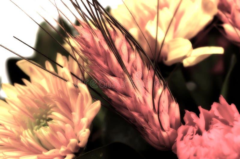 Frumento e fiori immagini stock libere da diritti