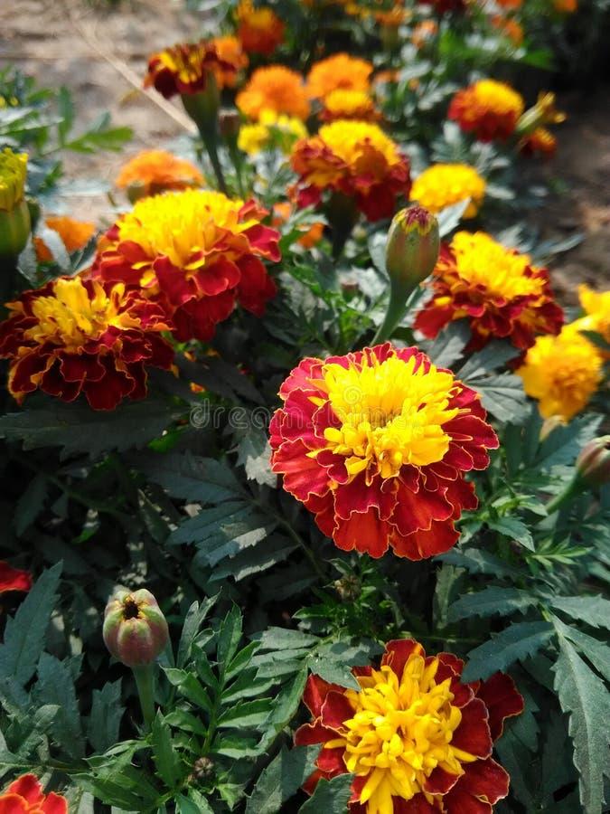 frunch av blomman fotografering för bildbyråer