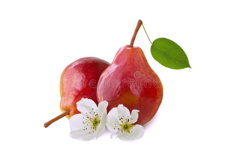 Fruta aislada de la pera en el fondo blanco con las flores y la hoja verde imagen de archivo