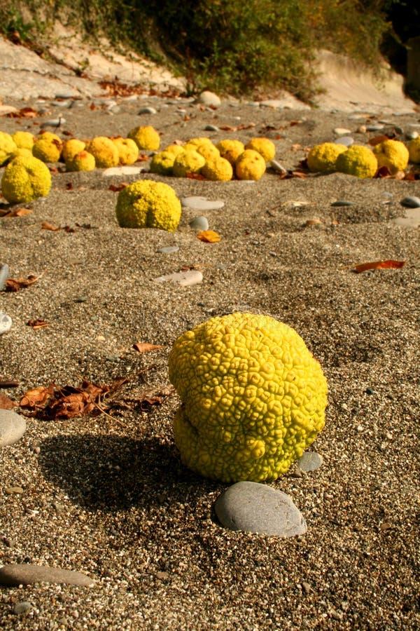Fruta amarilla del otoño en la playa imágenes de archivo libres de regalías