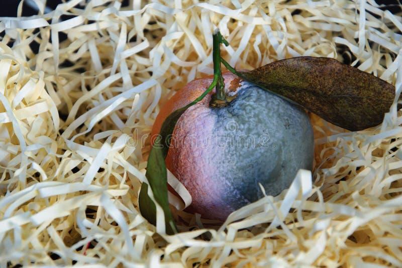 Fruta anaranjada putrefacta foto de archivo libre de regalías