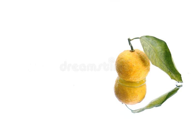 Fruta cítrica japonesa en fondo del agua blanca imagen de archivo