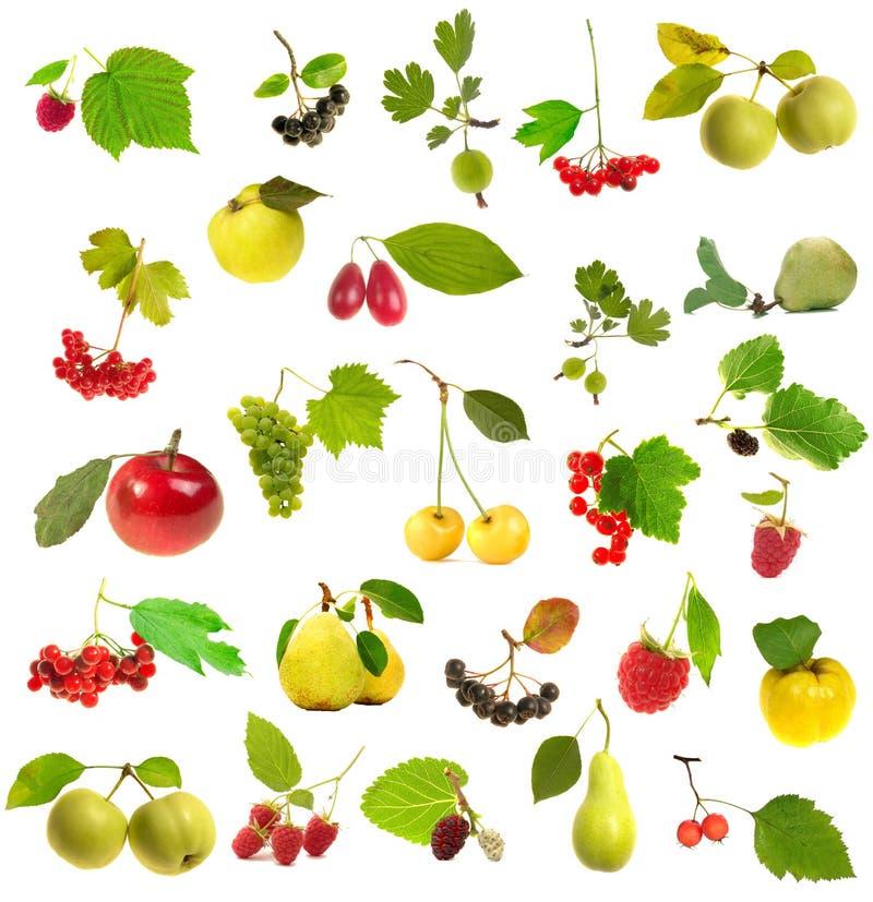 Fruta com um folheto fotografia de stock