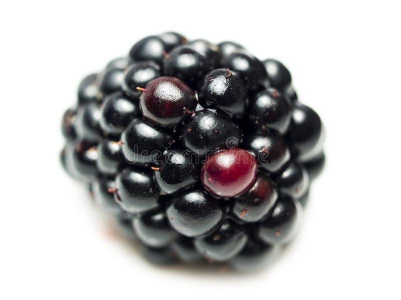 Fruta da amora-preta ou da amora imagem de stock royalty free