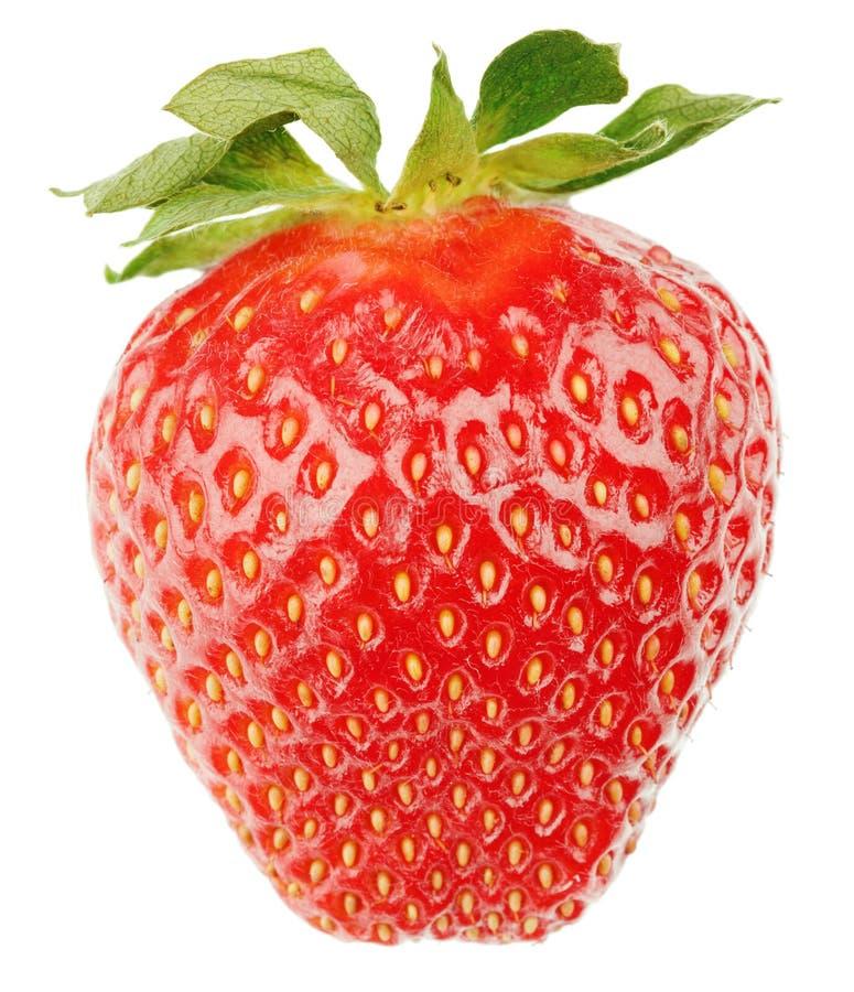 Fruta da morango fotos de stock royalty free