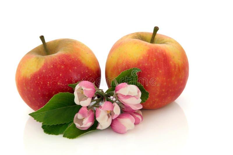 Fruta de Apple com flor da flor imagens de stock