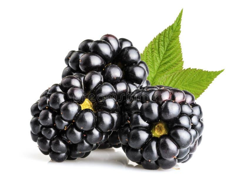 Fruta de Blackberry fotografía de archivo