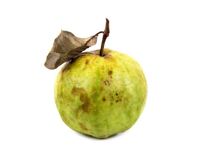 Fruta de guayaba putrefacta con la hoja seca aislada en el fondo blanco Guayaba putrefacta aislada imágenes de archivo libres de regalías