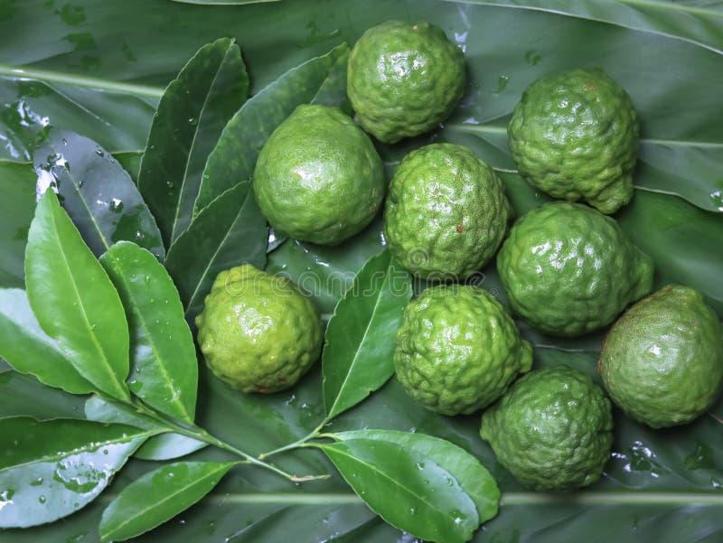 Fruta de la bergamota imagen de archivo libre de regalías