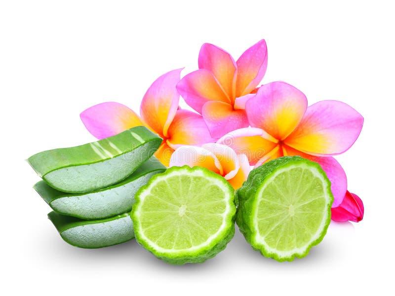 Fruta de la bergamota y hoja de Vera del áloe con la flor del frangipani aislada en el fondo blanco fotos de archivo libres de regalías