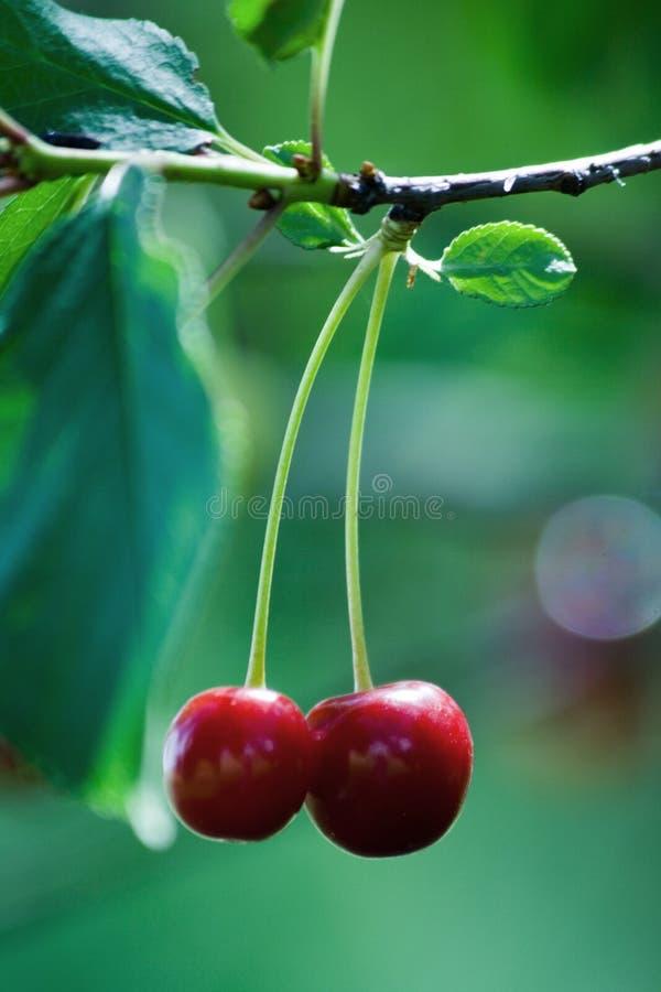 Fruta de la cereza imagenes de archivo