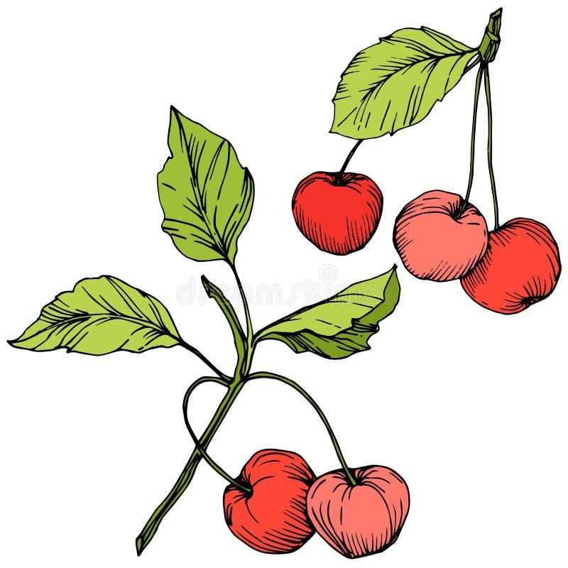 Fruta de la cereza del vector Arte grabado rojo y verde de la tinta Elemento aislado del ejemplo de la baya en el fondo blanco stock de ilustración