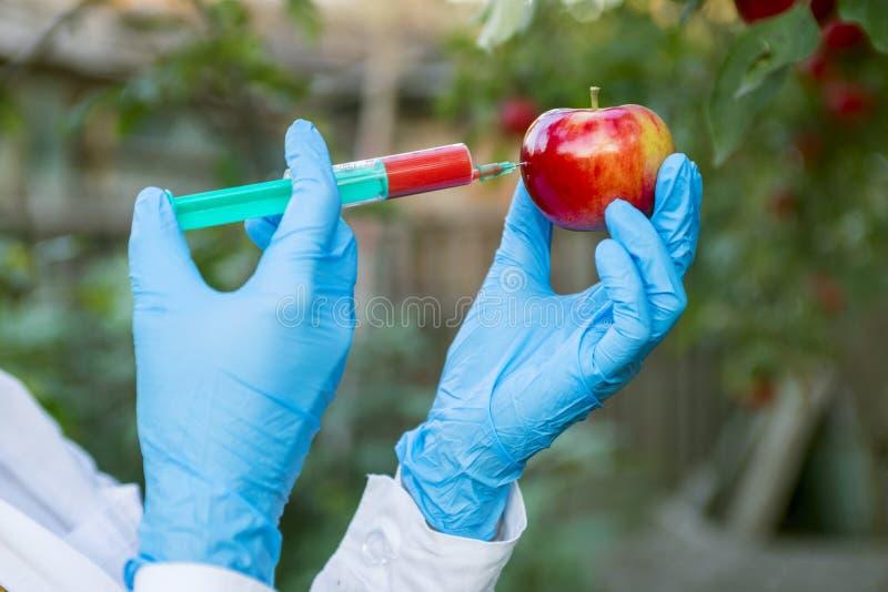 Fruta de la manzana de la tenencia de la mano con la jeringuilla con los fertilizantes químicos del color rojo en manzana GMO y m fotografía de archivo