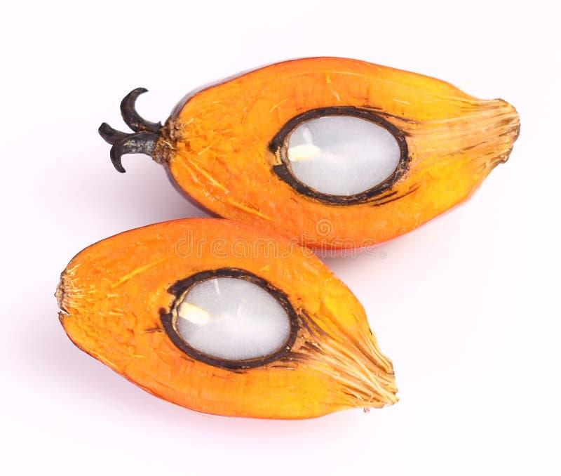 Fruta de la palma de aceite fotografía de archivo