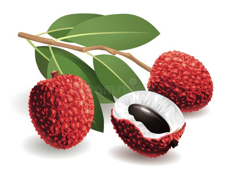 Fruta de Lychee ilustração royalty free