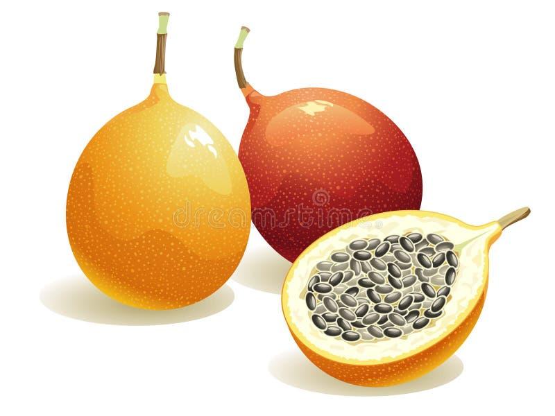 Fruta de paixão ilustração do vetor