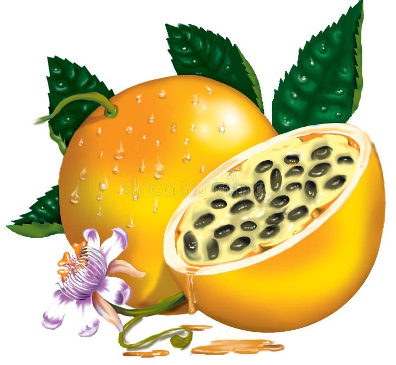 Fruta de pasión stock de ilustración