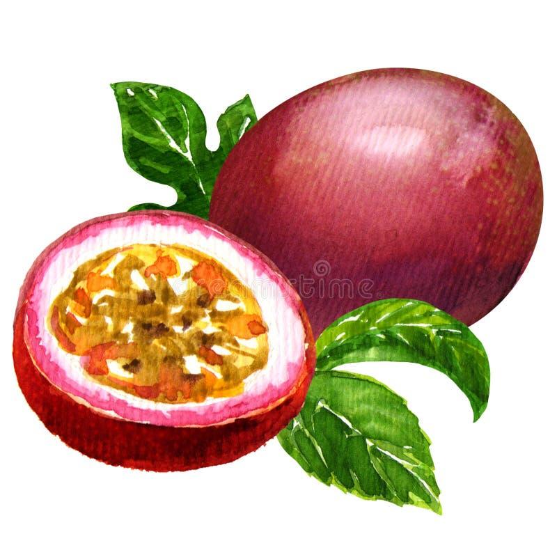 Fruta de pasión aislada libre illustration