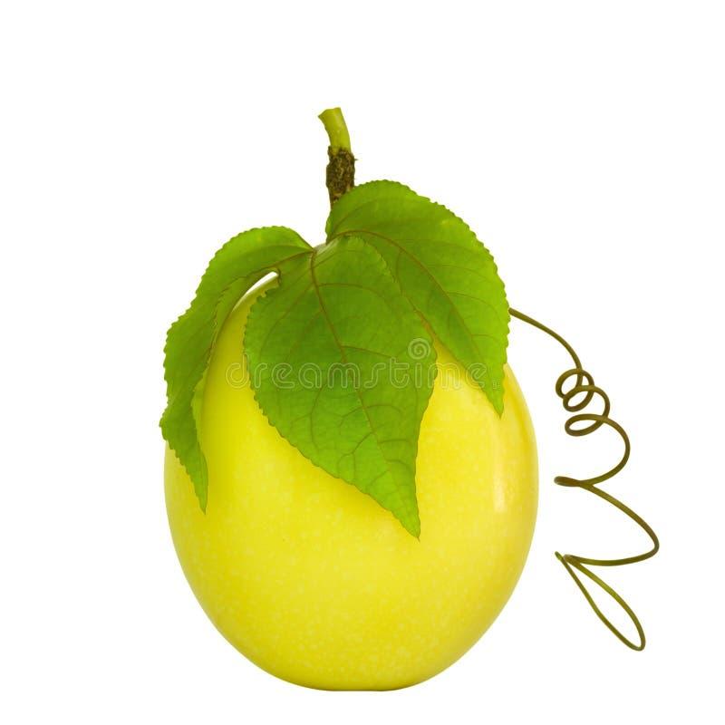Fruta de pasión aislada en blanco fotografía de archivo
