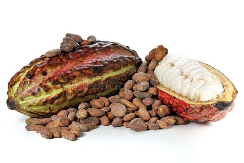 Fruta del cacao imágenes de archivo libres de regalías
