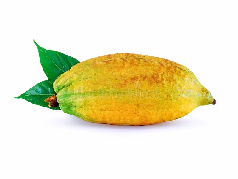 Fruta del cacao aislada en el fondo blanco foto de archivo