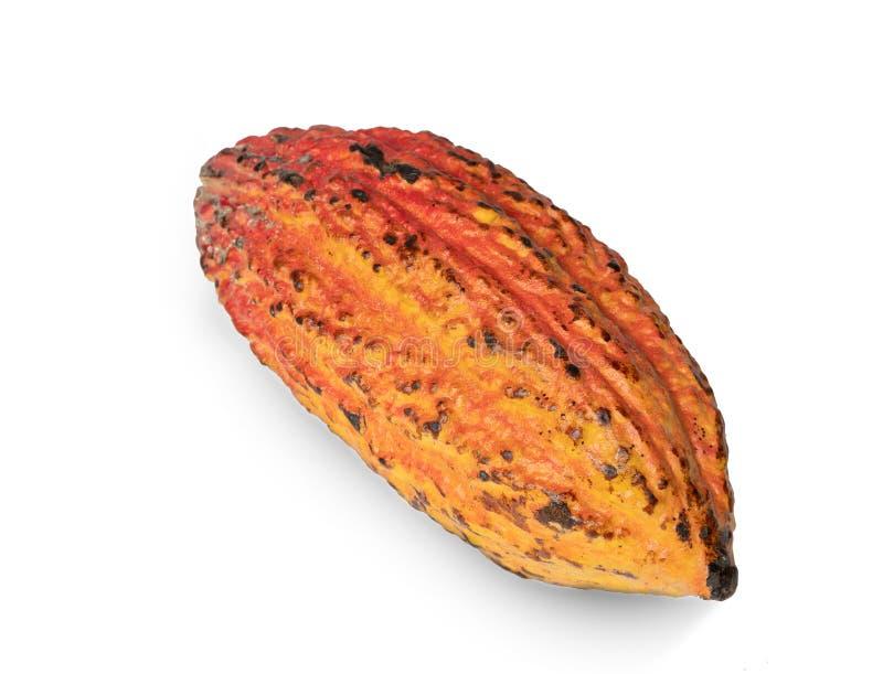 Fruta del cacao, habas crudas del cacao, vaina del cacao en el fondo blanco imagen de archivo libre de regalías