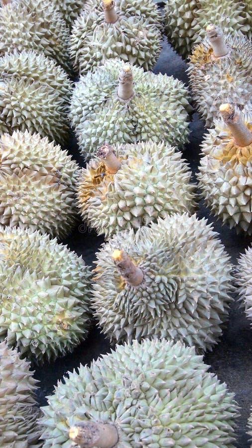 Fruta del Durian del rey fotos de archivo libres de regalías