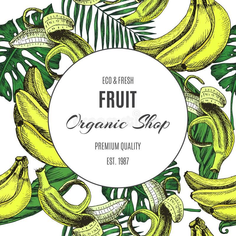Fruta del fondo del bosquejo del vector Plátano del ejemplo y modelo extic de las hojas libre illustration