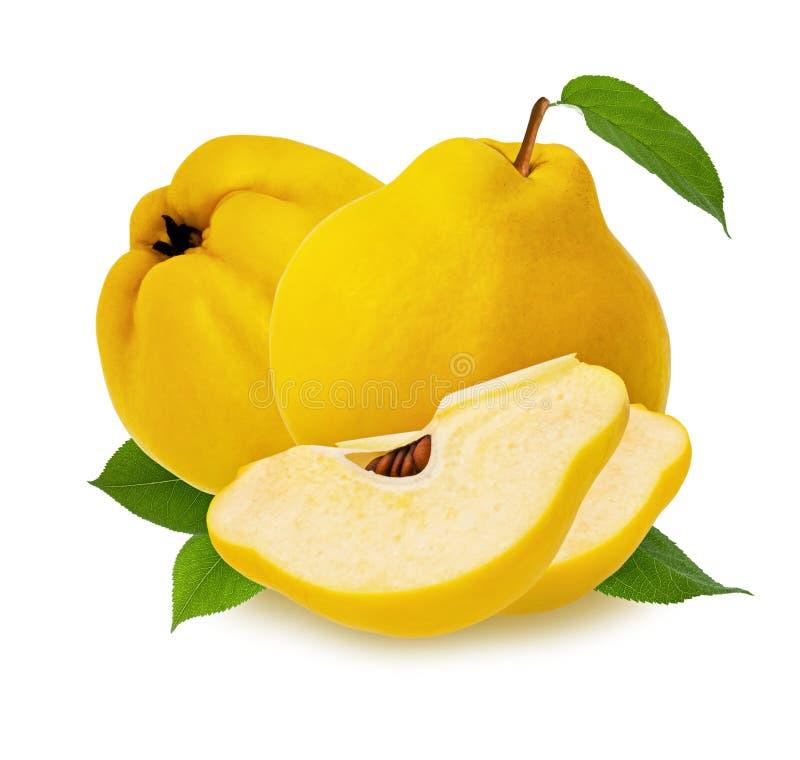 Fruta del membrillo aislada Fruta cruda amarilla madura del membrillo dos, rebanada con pulpa y hoja verde aislada en el fondo bl imagenes de archivo
