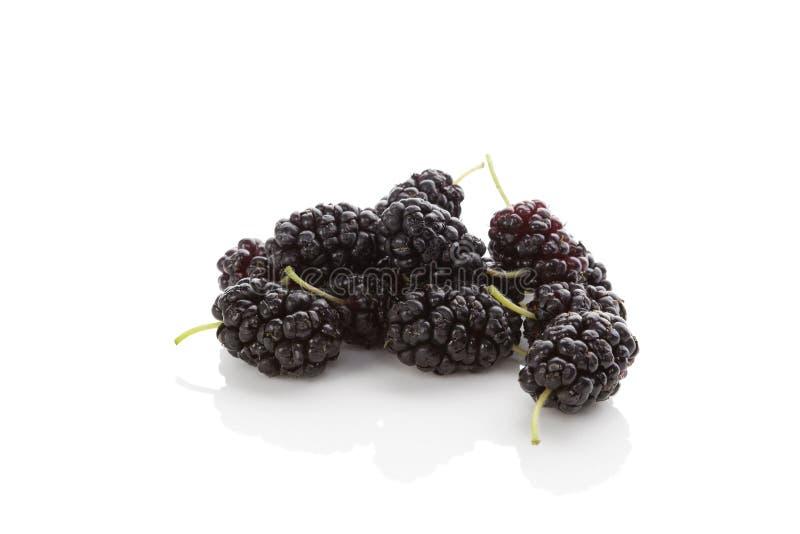 Fruta del Morus imagen de archivo libre de regalías