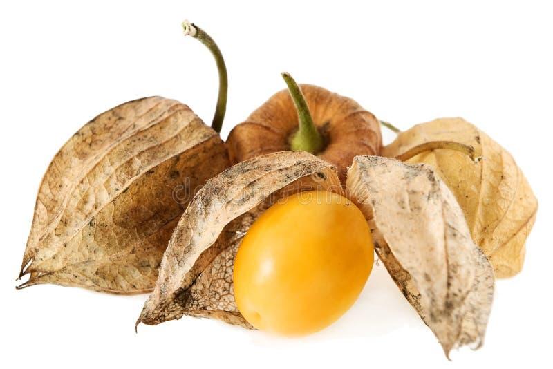 Fruta del Physalis fotografía de archivo libre de regalías