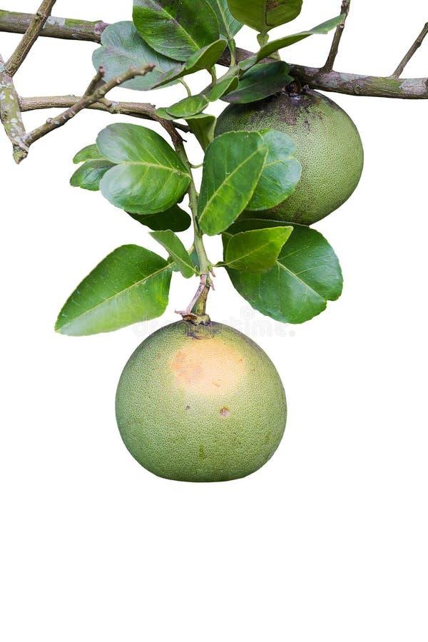 Fruta del pomelo imagenes de archivo