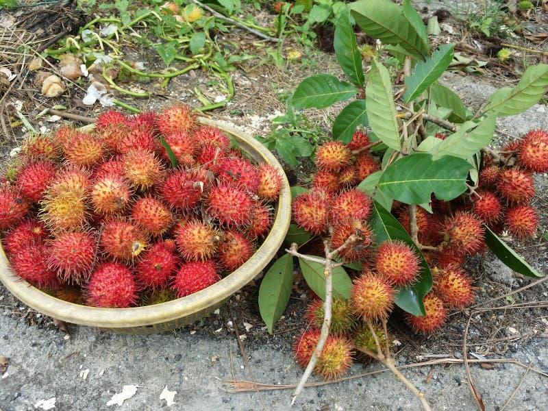 Fruta del Rambutan fotografía de archivo