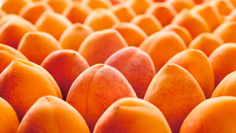 Fruta do alperce fotografia de stock