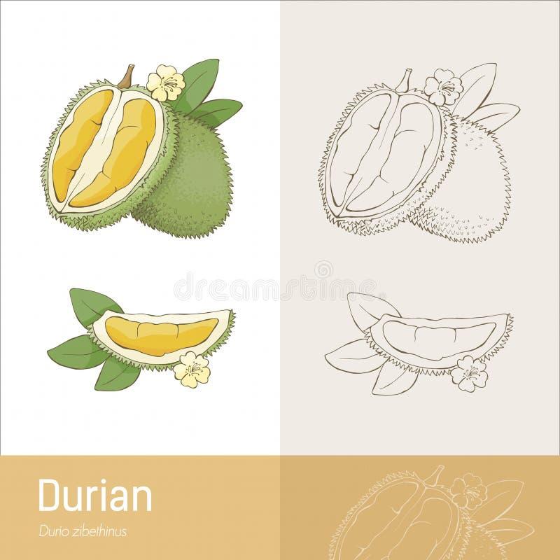 Fruta do Durian ilustração royalty free