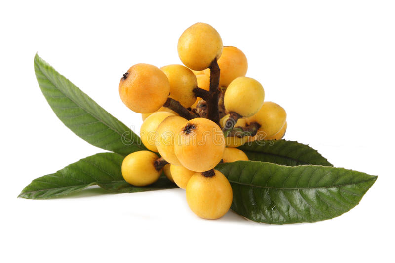 Fruta do Loquat fotografia de stock