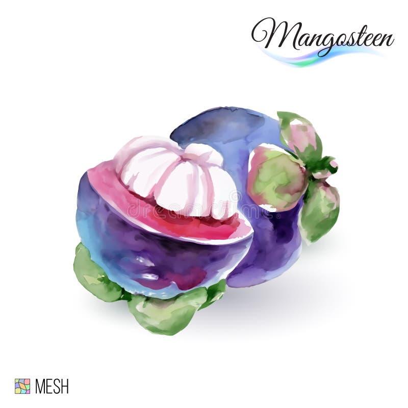 Fruta do mangustão ilustração do vetor