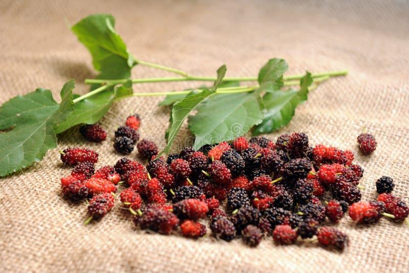 Fruta do Mulberry fotos de stock royalty free