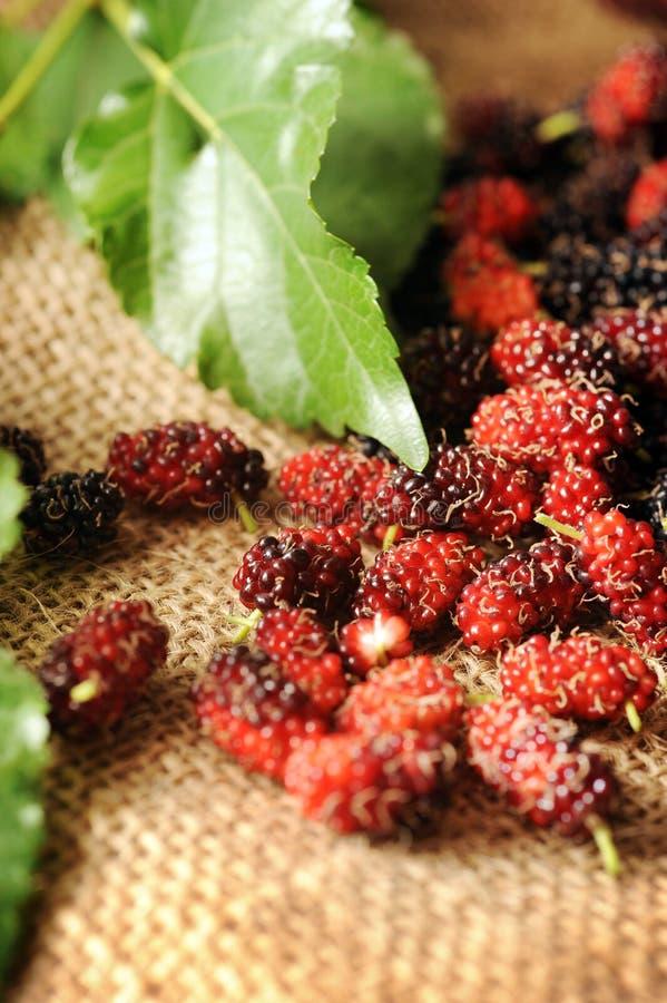 Fruta do Mulberry imagens de stock