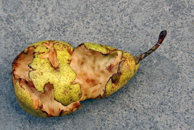 Fruta do pássaro fotografia de stock royalty free