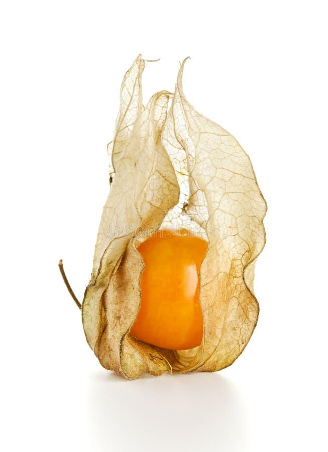 Fruta do Physalis fotos de stock royalty free