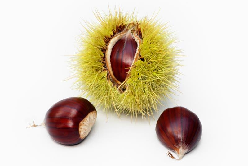 Fruta e sementes da castanha imagens de stock
