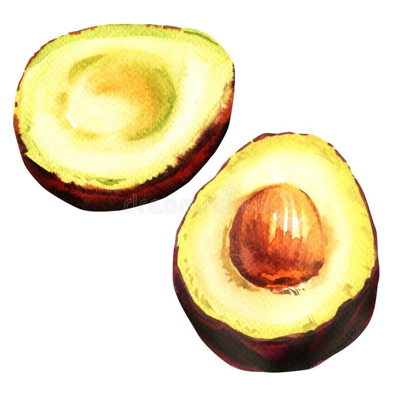 Fruta exótica madura fresca aislada, ejemplo exhausto del aguacate, entera y media de la acuarela de la mano en blanco stock de ilustración
