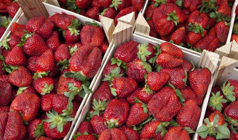 Fruta - fresas fotografía de archivo libre de regalías